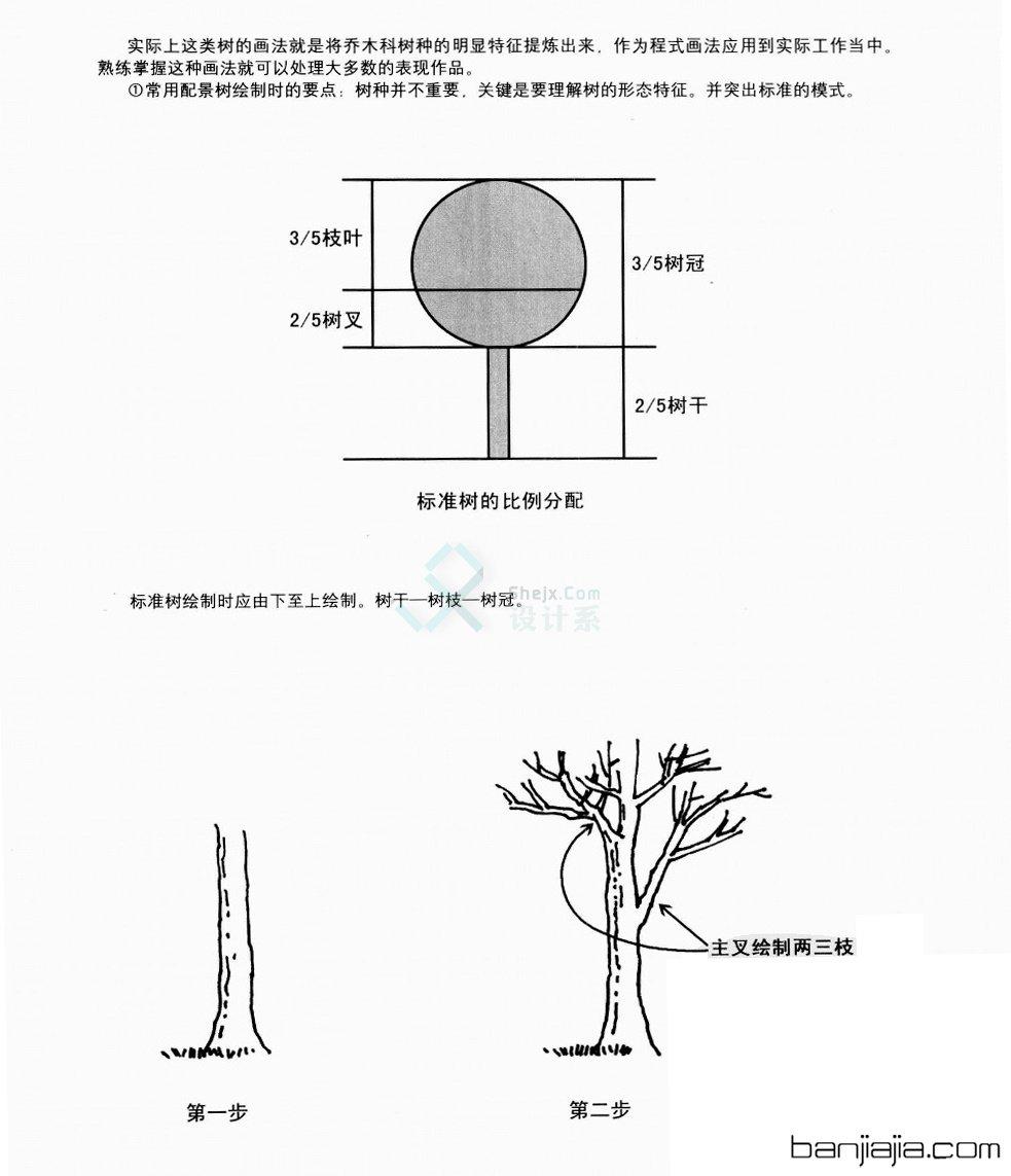 继续申精置顶!5 手绘植物单体线稿的画法,技巧,拓展练习及错误的画法
