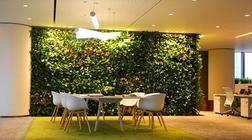 绿植在办公室及写字楼中起到了什么作用?