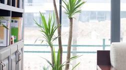 花栗鼠与氧气君 绿植设计作品